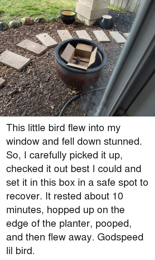 This Little Bird Flew Into My Window and Fell Down Stunned