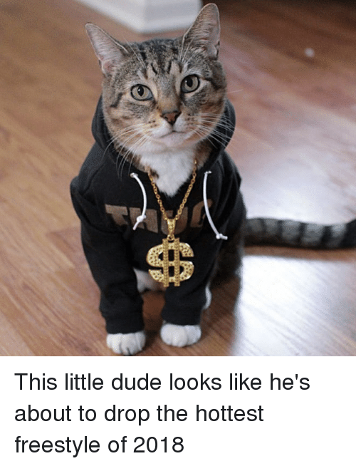 Dude, Freestyle, and This: This little dude looks like he's about to drop the hottest freestyle of 2018