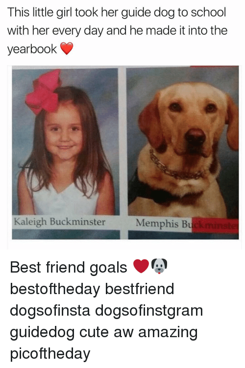 this little girl took her guide dog to school with 14445804 ✅ 25 best memes about guide dogs guide dogs memes