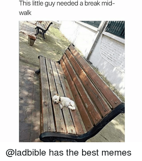 Funny, Memes, and Best: This little guy needed a break mid-  walk @ladbible has the best memes