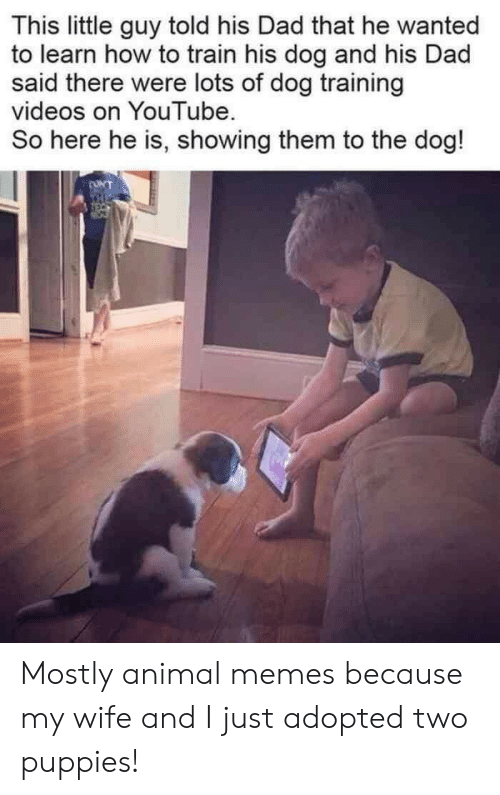 Dad, Memes, and Puppies: This little guy told his Dad that he wanted  to learn how to train his dog and his Dad  said there were lots of dog training  videos on YouTube  So here he is, showing them to the dog!  ONT  THE Mostly animal memes because my wife and I just adopted two puppies!
