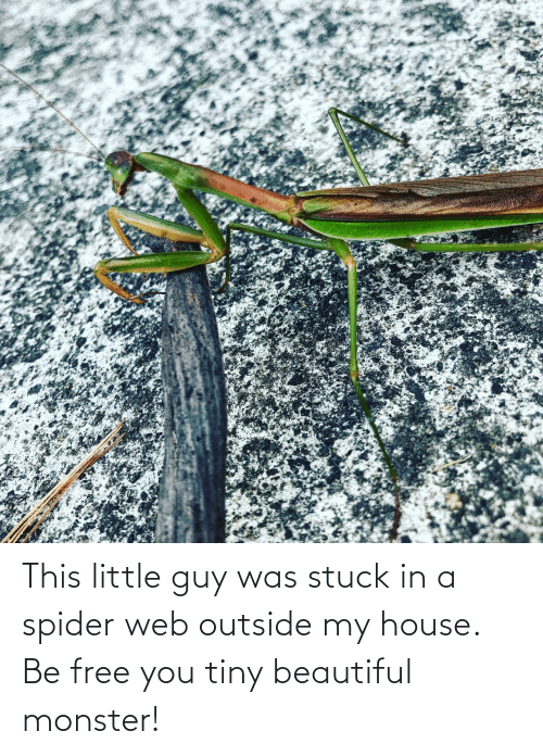 Beautiful, Monster, and My House: This little guy was stuck in a spider web outside my house. Be free you tiny beautiful monster!