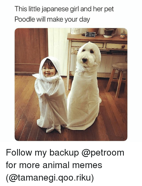 Funny, Memes, and Animal: This little japanese girl and her pet  Poodle will make your day Follow my backup @petroom for more animal memes (@tamanegi.qoo.riku)