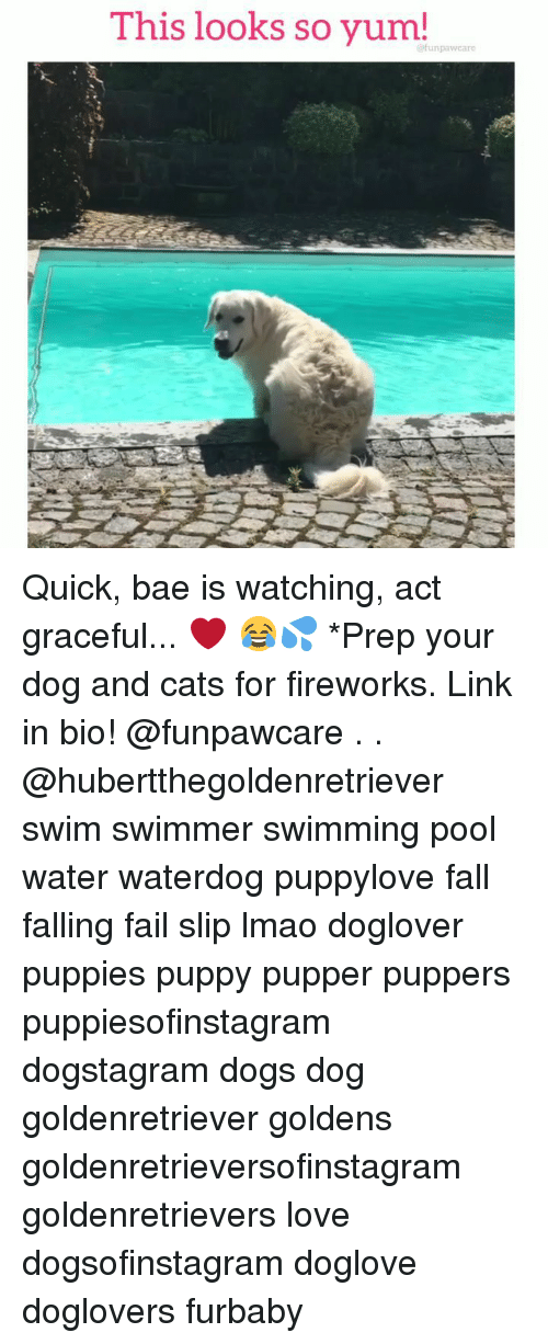 Bae, Cats, and Dogs: This looks so yum! Quick, bae is watching, act graceful... ❤️ 😂💦 *Prep your dog and cats for fireworks. Link in bio! @funpawcare . . @hubertthegoldenretriever swim swimmer swimming pool water waterdog puppylove fall falling fail slip lmao doglover puppies puppy pupper puppers puppiesofinstagram dogstagram dogs dog goldenretriever goldens goldenretrieversofinstagram goldenretrievers love dogsofinstagram doglove doglovers furbaby