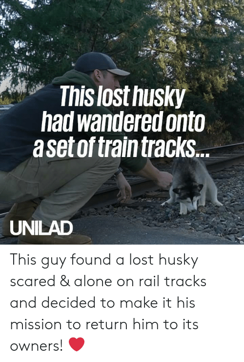 Being Alone, Dank, and Lost: This lost husky  had wandered onto  aset of train tracks  UNILAD This guy found a lost husky scared & alone on rail tracks and decided to make it his mission to return him to its owners! ❤️