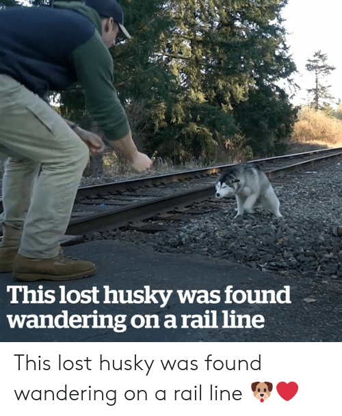 Lost, Husky, and Rail: This lost husky was found  wandering on a rail line This lost husky was found wandering on a rail line 🐶❤️
