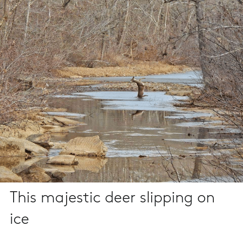 Deer, Ice, and This: This majestic deer slipping on ice