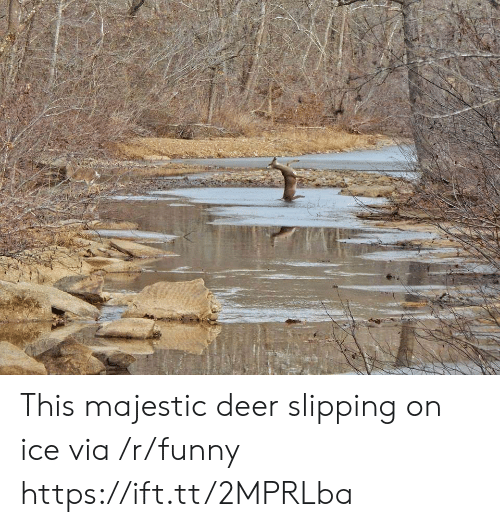 Deer, Funny, and Ice: This majestic deer slipping on ice via /r/funny https://ift.tt/2MPRLba