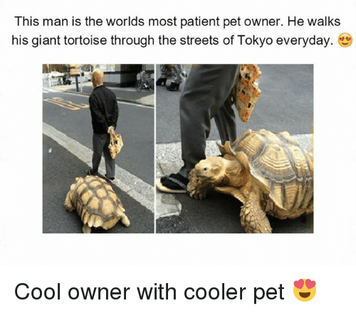 Best Memes About Giant Tortoise Giant Tortoise Memes - Man walks pet tortoise through tokyo
