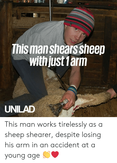 Dank, 🤖, and Arm: This man shears sheep  with just 1arm  UNILAD This man works tirelessly as a sheep shearer, despite losing his arm in an accident at a young age 👏❤️️