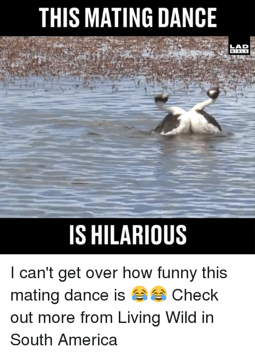 America, Dank, and Funny: THIS MATING DANCE  BIBLE  IS HILARIOUS I can't get over how funny this mating dance is 😂😂  Check out more from Living Wild in South America