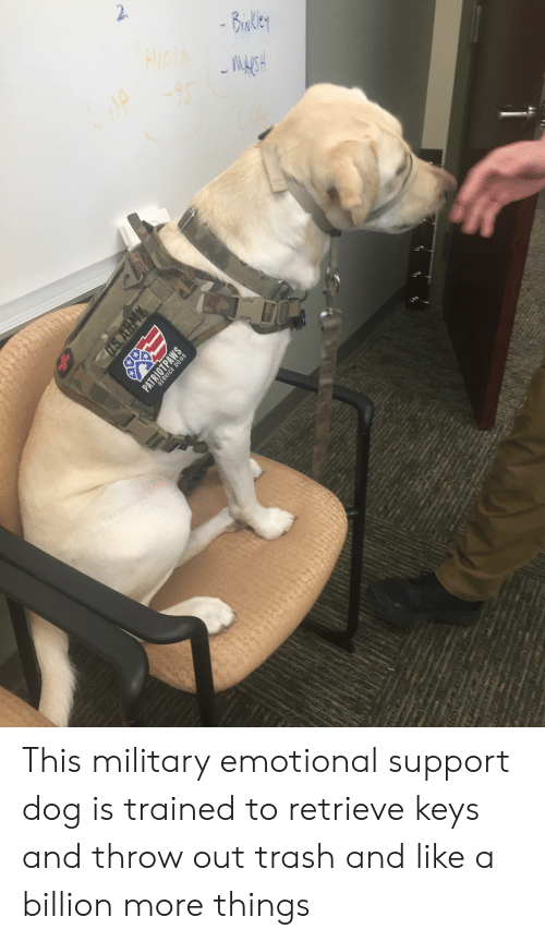 Trash, Military, and Dog: This military emotional support dog is trained to retrieve keys and throw out trash and like a billion more things