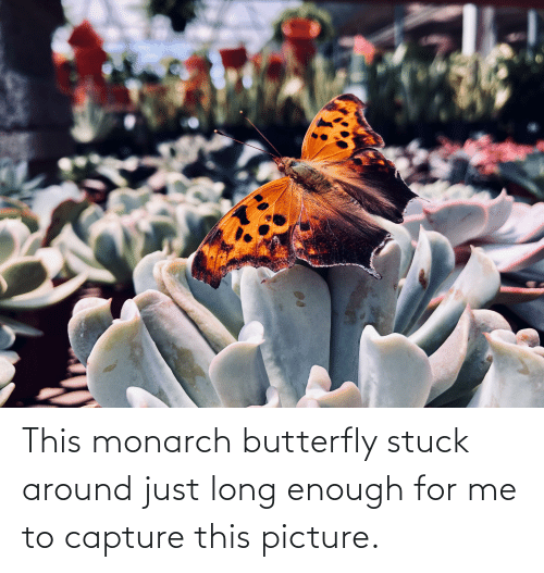 This Monarch Butterfly Stuck Around Just Long Enough for ...