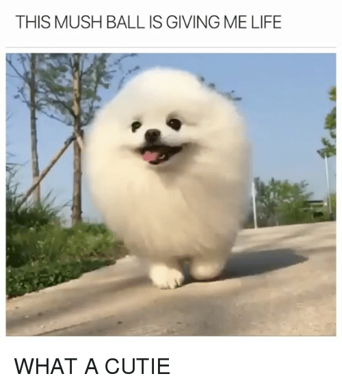 Funny, Life, and Mush: THIS MUSH BALL IS GIVING ME LIFE WHAT A CUTIE