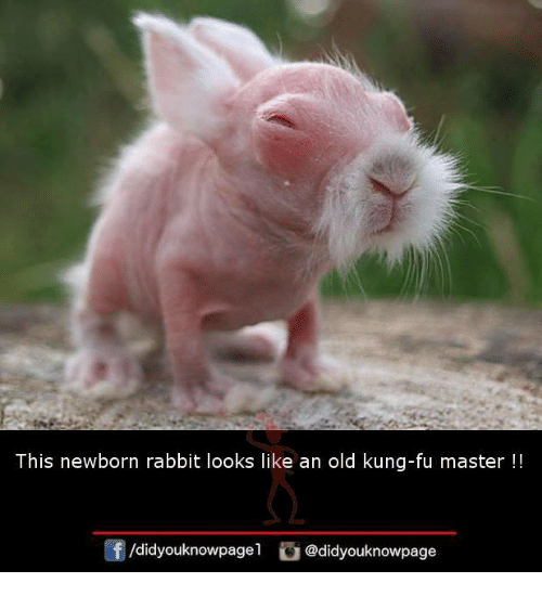 Memes, Rabbit, and Old: This newborn rabbit looks like an old kung-fu master !!  /didyouknowpagel@didyouknowpage