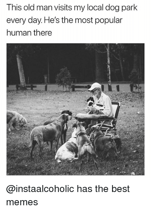 Funny, Memes, and Old Man: This old man visits my local dog park  every day. He's the most popular  human there @instaalcoholic has the best memes