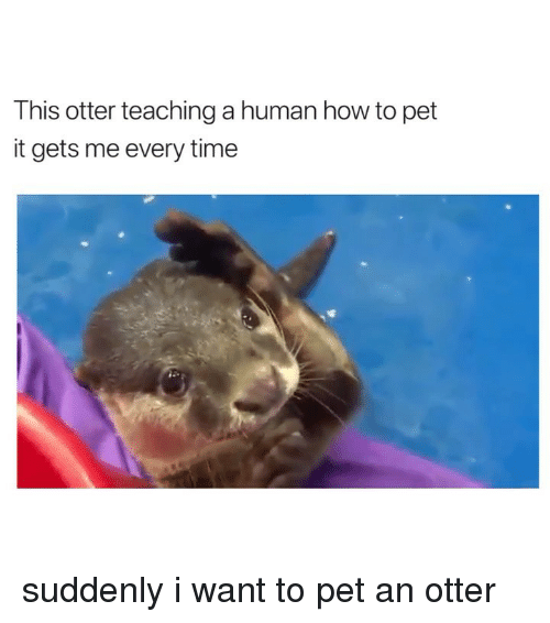 How To, Time, and Girl Memes: This otter teaching a human how to pet  it gets me every time suddenly i want to pet an otter