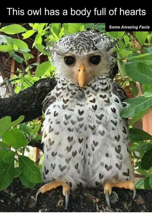Dank, 🤖, and Owl: This owl has a body full of hearts  Some Amazing Facts