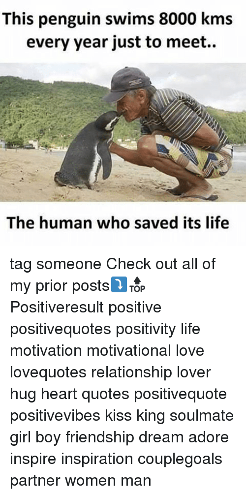 Life, Love, and Memes: This penguin swims 8000 kms  every year just to meet..  The human who saved its life tag someone Check out all of my prior posts⤵🔝 Positiveresult positive positivequotes positivity life motivation motivational love lovequotes relationship lover hug heart quotes positivequote positivevibes kiss king soulmate girl boy friendship dream adore inspire inspiration couplegoals partner women man