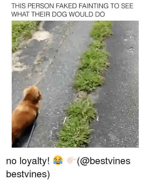 this person faked fainting to see what their dog would 22845870 ✅ 25 best memes about no loyalty no loyalty memes