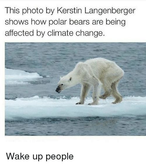 This Photo By Kerstin Langenberger Shows How Polar Bears Are Being