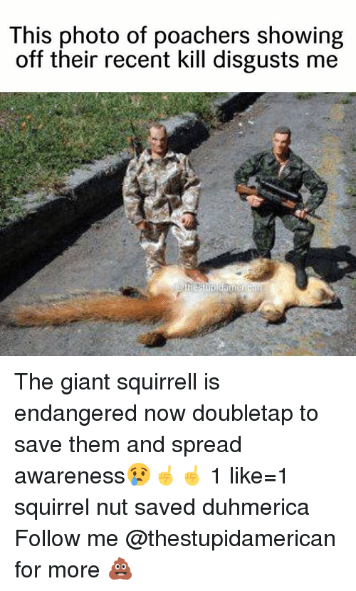 Giant, Squirrel, and Dank Memes: This photo of poachers showing  off their recent kill disgusts me  @thestupidamert The giant squirrell is endangered now doubletap to save them and spread awareness😢☝️☝️ 1 like=1 squirrel nut saved duhmerica Follow me @thestupidamerican for more 💩