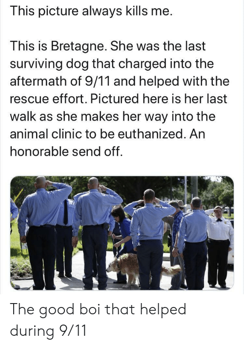 9/11, Animal, and Good: This picture always kills me.  This is Bretagne. She was the last  surviving dog that charged into the  aftermath of 9/11 and helped with the  rescue effort. Pictured here is her last  walk as she makes her way into the  animal clinic to be euthanized. An  honorable send off. The good boi that helped during 9/11