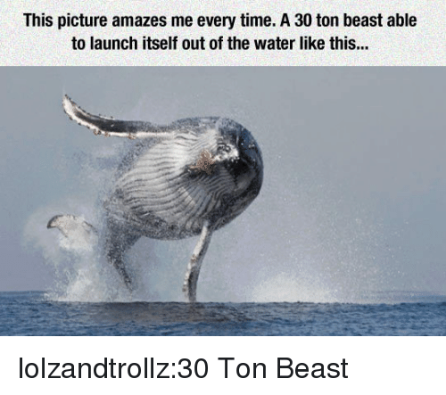 Tumblr, Blog, and Http: This picture amazes me every time. A 30 ton beast able  to launch itself out of the water like this... lolzandtrollz:30 Ton Beast