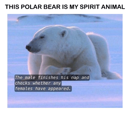 This Polar Bear Is My Spirit Animal The Male Finishes His Nap And