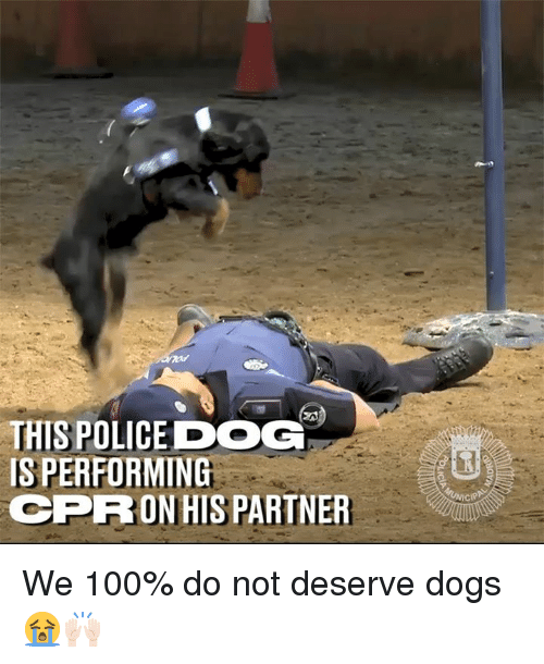 Anaconda, Dank, and Dogs: THIS POLICEDOG  IS PERFORMING  CPRON HIS PARTNER We 100% do not deserve dogs 😭🙌🏻