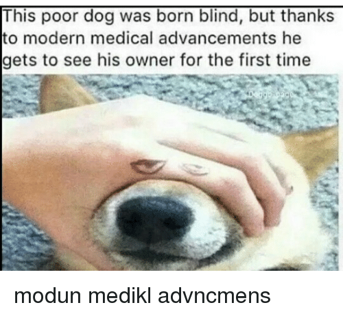 this poor dog was born blind but thanks to modern 6832784 this poor dog was born blind but thanks to modern medical