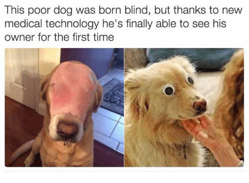 this poor dog was born blind but thanks to new 5687768 this poor dog was born blind but thanks to new medical technology