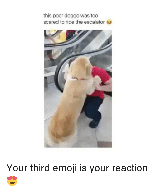 Emoji, Memes, and 🤖: this poor doggo was too  scared to ride the escalator Your third emoji is your reaction😍