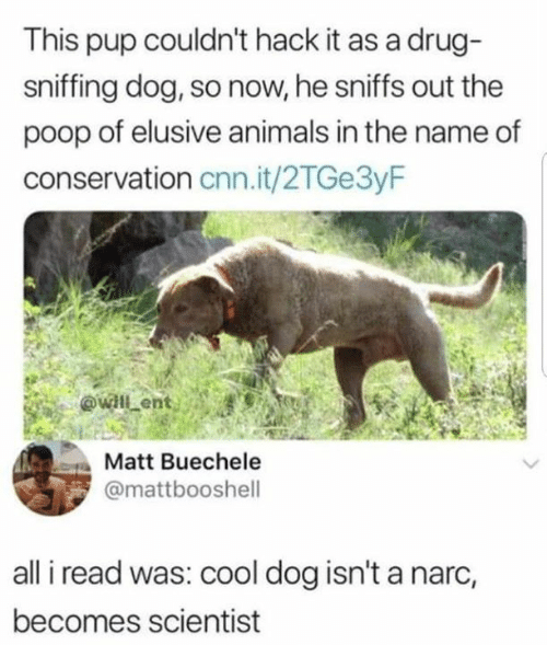 Animals, cnn.com, and Dank: This pup couldn't hack it as a drug-  sniffing dog, so now, he sniffs out the  poop of elusive animals in the name of  conservation cnn.it/2TGe3yF  Matt Buechele  @mattbooshell  all i read was: cool dog isn't a narc,  becomes scientist