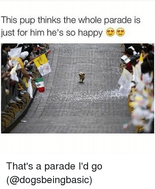 dog thinks parade is for him