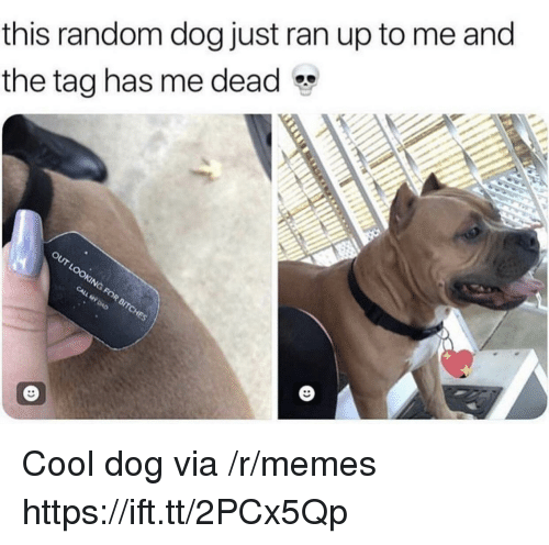Memes, Cool, and Dog: this random dog just ran up to me and  the tag has me dead Cool dog via /r/memes https://ift.tt/2PCx5Qp
