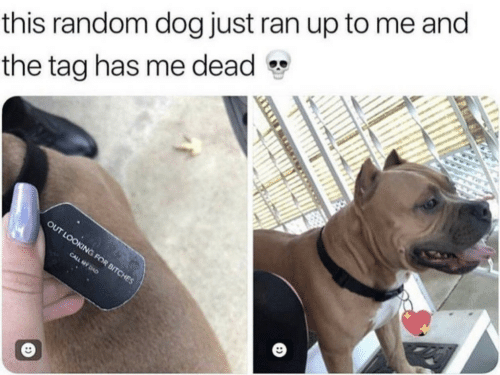 Dog, Random, and Ran: this random dog just ran up to me and  the tag has me dead