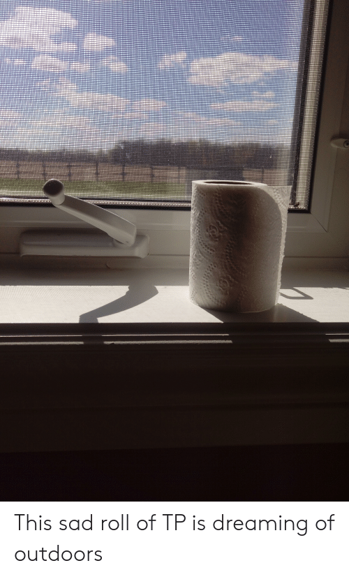 Sad, This, and Dreaming: This sad roll of TP is dreaming of outdoors