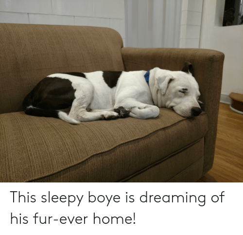 Home, Fur, and This: This sleepy boye is dreaming of his fur-ever home!