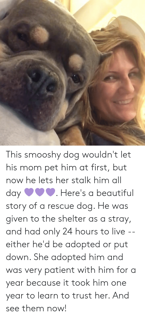 Beautiful, Memes, and Live: This smooshy dog wouldn't let his mom pet him at first, but now he lets her stalk him all day 💜💜💜. Here's a beautiful story of a rescue dog. He was given to the shelter as a stray, and had only 24 hours to live -- either he'd be adopted or put down. She adopted him and was very patient with him for a year because it took him one year to learn to trust her. And see them now!