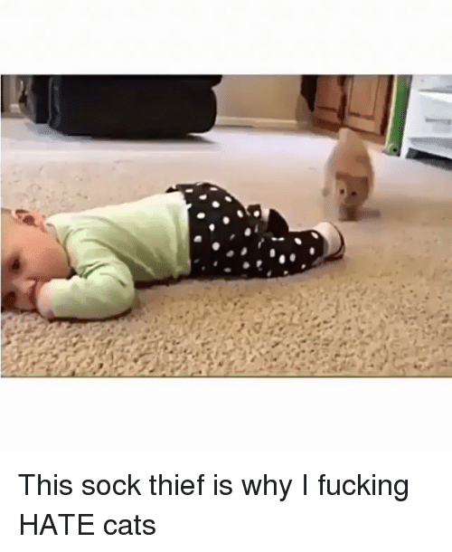 Cats, Fucking, and Funny: This sock thief is why I fucking HATE cats