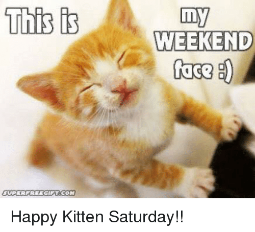 Image result for happy kittens