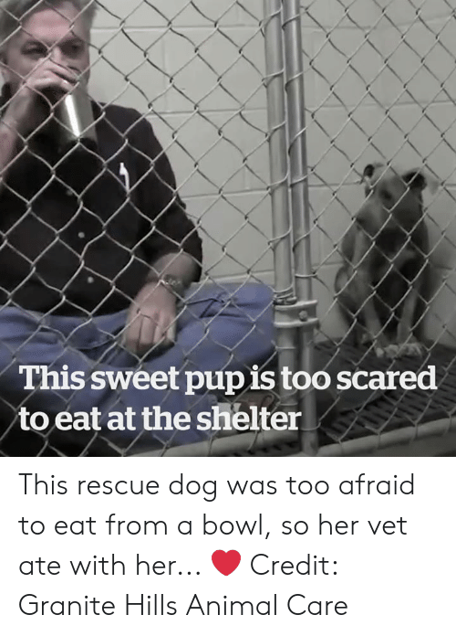 Animal, Bowl, and Her: This sweet pupis too scared  to eat at the shelter This rescue dog was too afraid to eat from a bowl, so her vet ate with her... ❤️  Credit: Granite Hills Animal Care