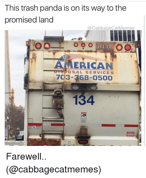Memes, Trash, and Panda: This trash panda is on its way to the  promised land  @Cabbage Cat Memes  HEIL  AMERICAN  POS, AL SERVICES  703- 68-o500  134 Farewell.. (@cabbagecatmemes)