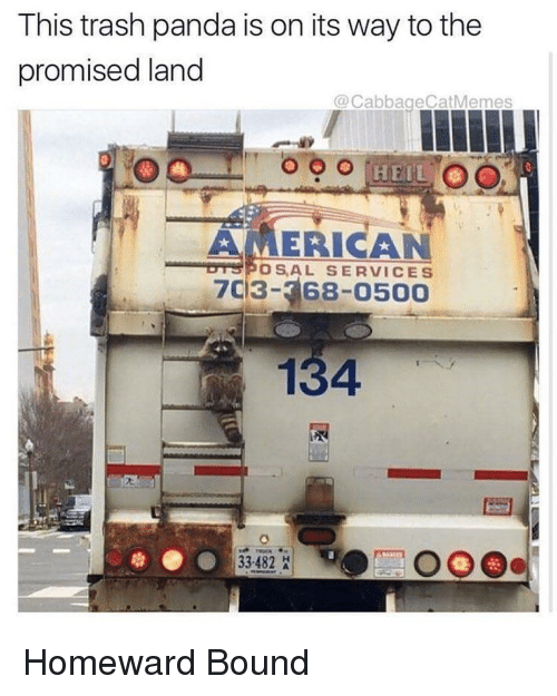 Trash, Panda, and American: This trash panda is on its way to the  promised land  @CabbageCatMemes  AMERICAN  703-368-0500  OSAL SERVICES  134  33-482 <p>Homeward Bound</p>