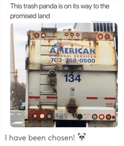 Trash, Panda, and American: This trash panda is on its way to the  promised land  @cabbagecatmemes  AMERICAN  thプやOS,AL SERVICES  703-368-0500  134 I have been chosen! 🐼