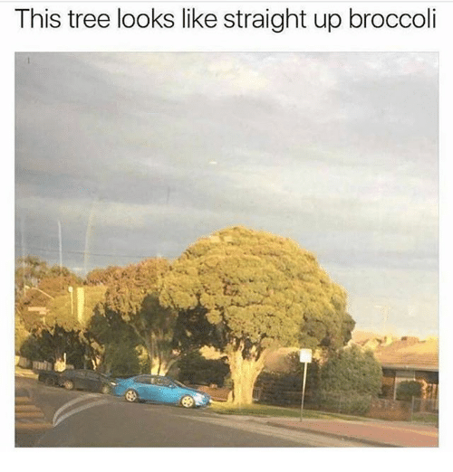 Funny, Tree, and Broccoli: This tree looks like straight up broccoli