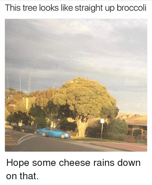 Memes, Tree, and Hope: This tree looks like straight up broccoli Hope some cheese rains down on that.