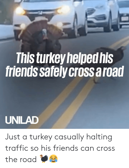 Dank, Friends, and Traffic: This turkey helpedhis  friends safelycross a road  UNILAD Just a turkey casually halting traffic so his friends can cross the road 🦃😂