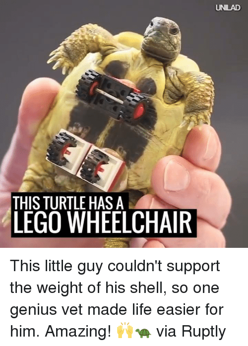 Dank, Lego, and Genius: THIS TURTLE HAS A  LEGO WHEELCHAIR  UNILAD This little guy couldn't support the weight of his shell, so one genius vet made life easier for him. Amazing! 🙌🐢  via Ruptly